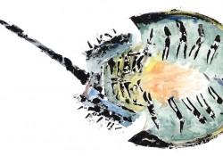 Horseshoe crab inked animal