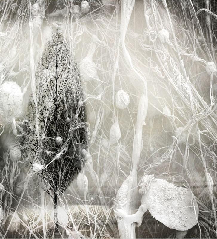 Hidden by Carla Ciuffo