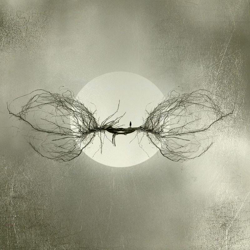 Lace by Carla Ciuffo